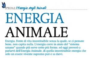 articolo_Cavalieri - Copia