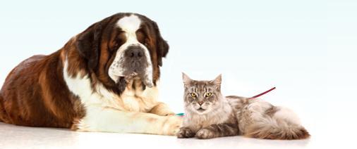cane-gatto-concorso-foto1
