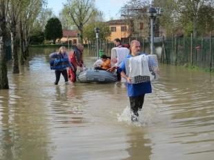 Emergenza al Parco Canile di Milano! Cani e gatti salvi e si accende la polemica!