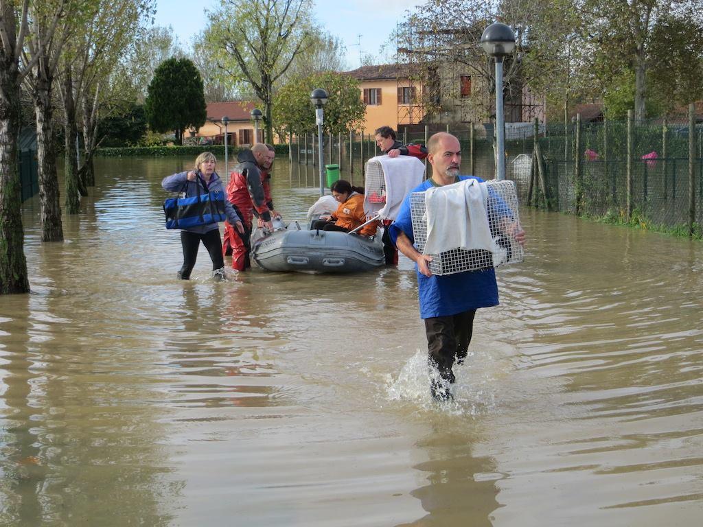 mondo gatto alluvione