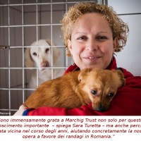 SAVE THE DOGS VINCE IL MARCHIG ANIMAL WELFARE AWARD 2014