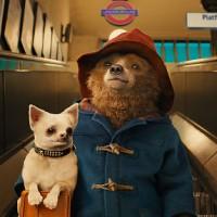 Paddington : dal 1958 l'orso buono che tutti amano!!!!