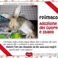 SOS BAU: EPIMACO buttato in un burrone a calci… Ancora vivo cerca casa e giustizia!