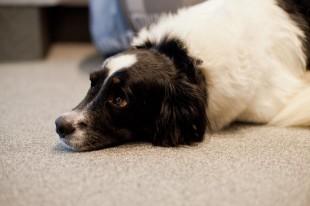 Smarrimento Animali, su iOS per combattere abbandono e maltratrattamento