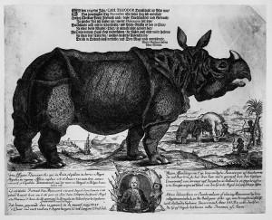Il rinoceronte Clara
