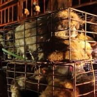 Salvati in Cina 800 cani destinati al macello