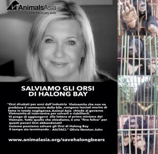 Animals Asia chiede al governo vietnamita di rilasciare gli orsi moribondi