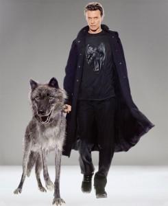 bowie wolf