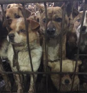 dog rescue China 3
