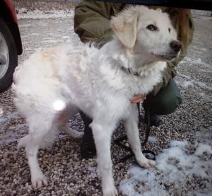 Piazzola sul Brenta sequestrati due cani ad opera delle guardie zoofile della LAC