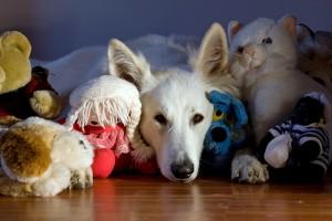 dolcissimo cane con peluches