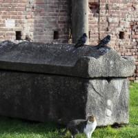 A Lecce la prima clinica per accogliere i Gatti di strada non autosufficienti