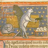 Misteri Bestiali: gatto Pangur
