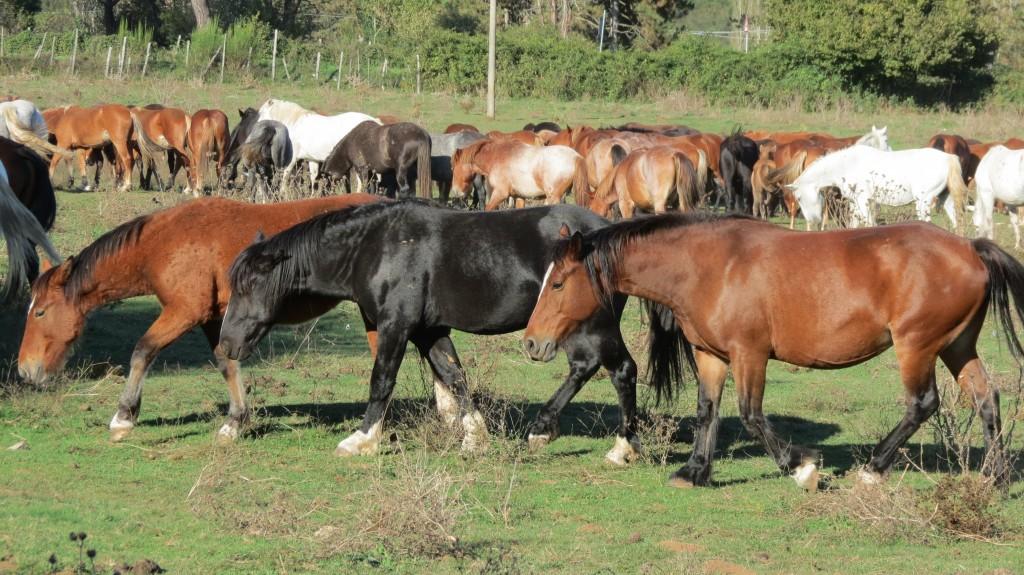 cavalli radiobau