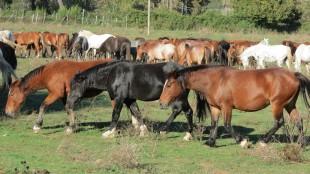 NO ai cavalli DPA in FISE
