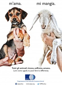 agnello-cane