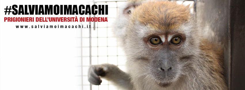 SALVIAMO I MACACHI!!!