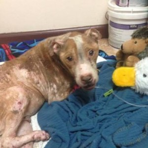 Photo courtesy of Special Needs Animal Rescue Rehabilitation