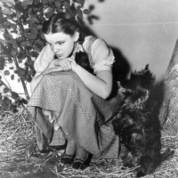 Toto e Judy Garland