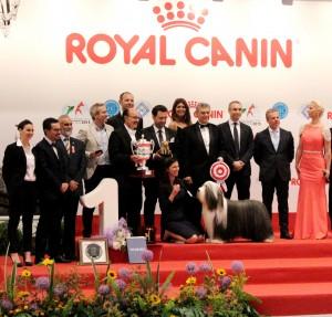 RAFAEL DE SANTIAGO (PRESIDENTE FCI); DINO MUTO (PRESIDENTE ENCI), OLGA KLIMOVA (PROPRIETARIA CAMPIONE DEL MONDO) insieme al cane Campione del mondo assoluto 'OPS I DID IT AGAIN DEL CUORE IMPAVIDO'