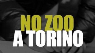 """SABATO 4 LUGLIO ORE 15 PRESIDIO EX ZOO PARCO MICHELOTTI """"LIBERI ANIMALI IN LIBERO PARCO"""""""