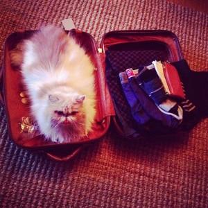 La Lilith in valigia