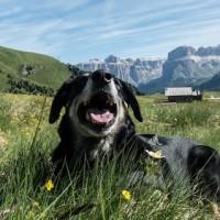 Vacanza a quattro zampe: un'estate (QUASI) accessibile
