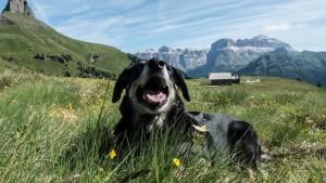 OsservatorioEuropcar_vacanze_con_animali