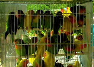 """ASSOCIAZIONI ANIMALISTE LECCHESI e VOLONTARI FREELANCE UNITI CONTRO LA """"54° FIERA di USEI"""" di CANZO"""