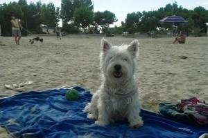 spiaggia per cani giulianova