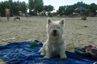 Spiaggia di Giulianova: Finalmente giustizia