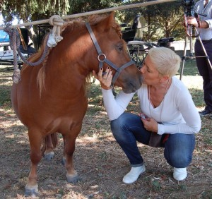 Il Cavallo, un animale da Relazione