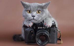 17 concorso scatto al gatto al supercatshow