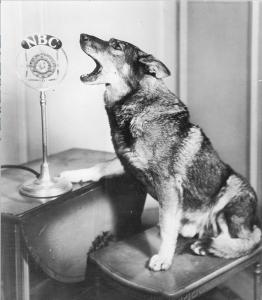 1930 Rin Tin Tin canta alla radio NBC