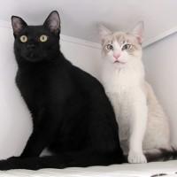 Dimitri e Anastacia