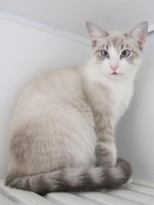 Anastasia Mondo Gatto