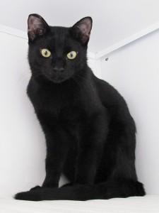 Dimitri Mondo Gatto