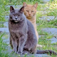 Red e Willy: i gatti gay vi aspettano al Super Cat Show a Roma