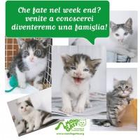Agenda Mondo Gatto