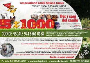 L'Associazione Canili Milano cerca Volontari