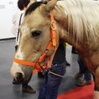 Fiera Cavalli Verona, l'inferno dei Cavalli