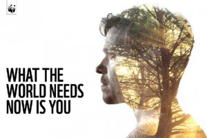 wwf-will young