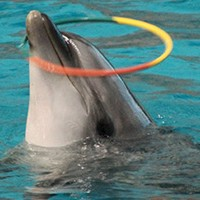Animals Asia ferma il progetto di un delfinario in Vietnam, ma non è ancora finita!