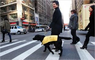 Isabella Rossellini: da Icona della Moda ad Istruttrice di cani-guida