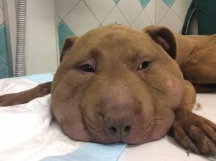 PALLA: Non cerca donazioni, ma sara' la testimonial di tutti gli animali maltrattati