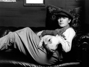 bowie and pig