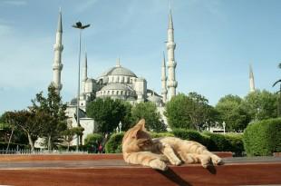 I Gatti di Istambul