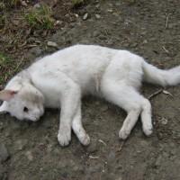 Gatto-avvelenato