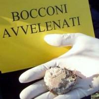 bocconi-polpette-avvelenate