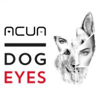 Dog Eyes: da cane abbandonato a cane guida per i non vedenti